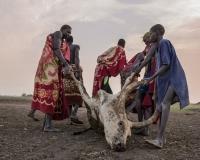 南苏丹的丁卡人